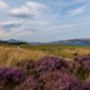 Heather at the Isle of Skye Golf Club