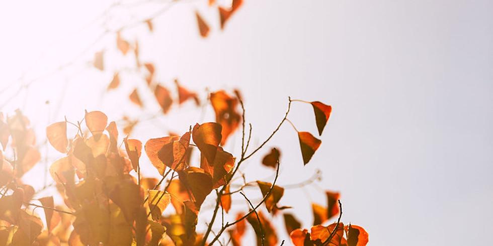 Fall Mindfulness Walk