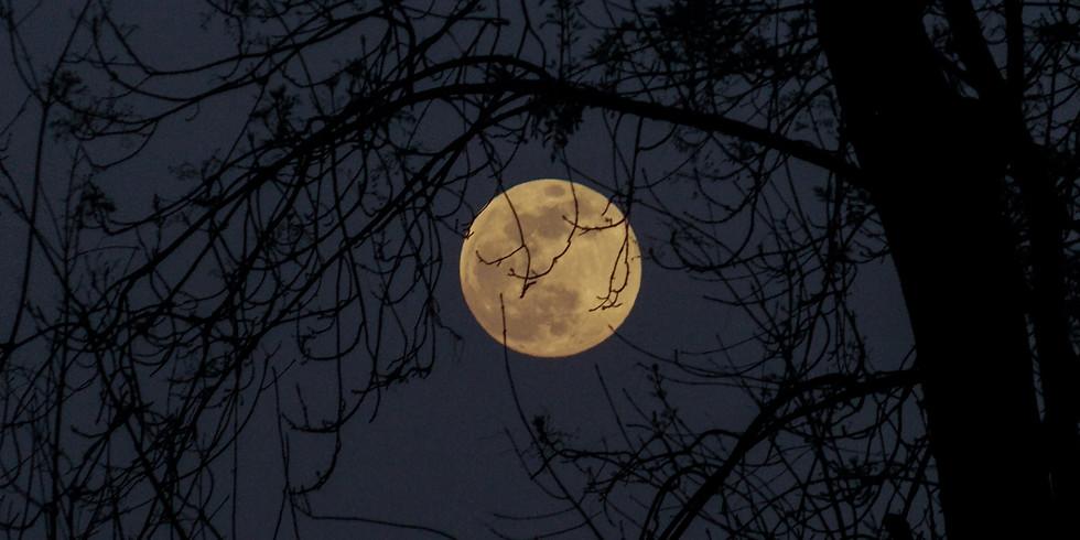 Full Moon Meeting - Howlllll!