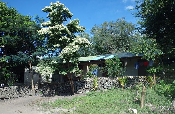 Homestay cabins under the madroño tree