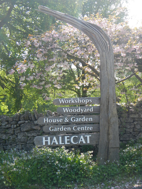 Halecat signs by Charlie Whinney Studio