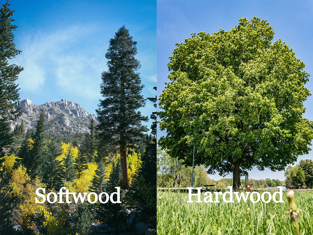 A softwood tree and a hardwood tree side by side to show the difference. The most common types of hardwood and softwood in Pennsylvania