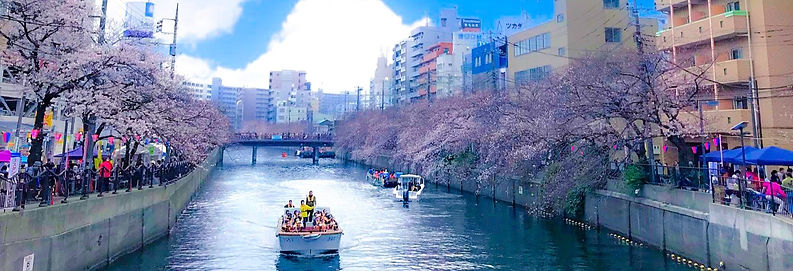 sakura_edited_edited.jpg