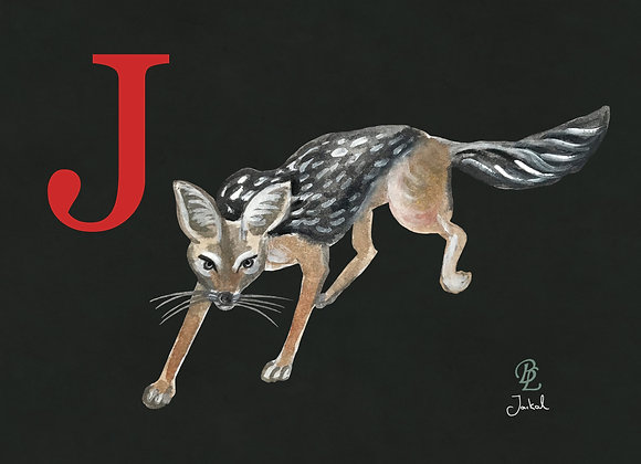 J for Jackal Small