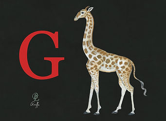 Girafe plain background.jpg