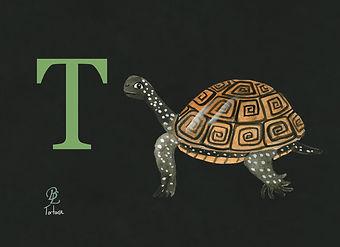 T TORTOISE.jpg