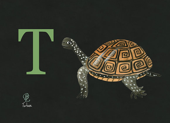 T for Tortoise Small