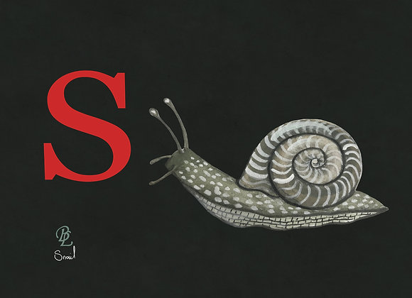 S for Snail Small