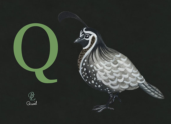 Q for Quail Small