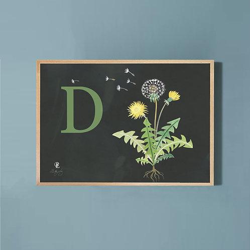 Dandelion- Charcoal