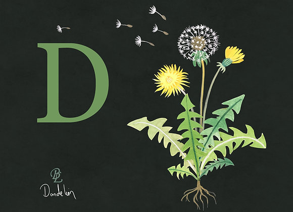 D for Dandelion Small