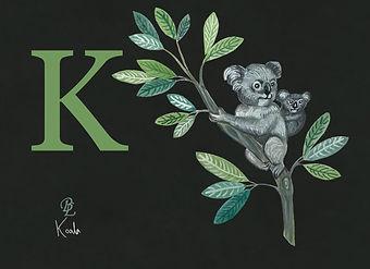 k koala.jpg
