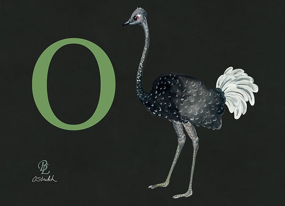 O for Ostrich Small
