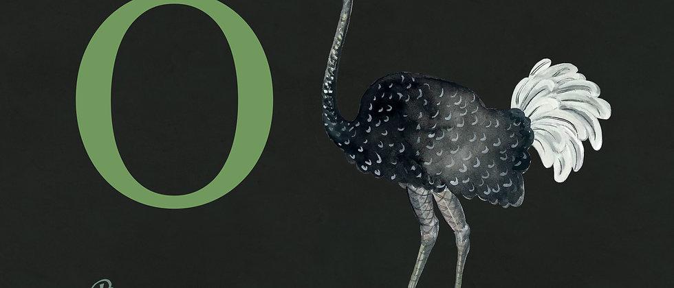 O for Ostrich Mdeium
