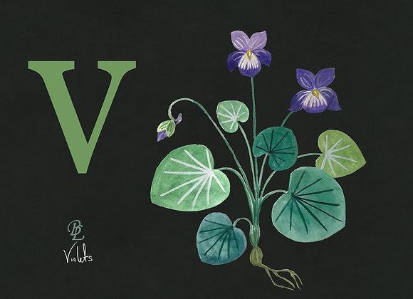 V for Violet Small