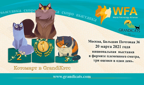 _grandicats.jpg
