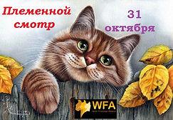 cbeb17999bb9f53d449ecd1af79fc4cd--kitty-