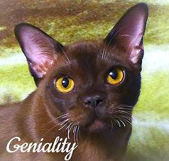 Ch Orion Geniality.jpg