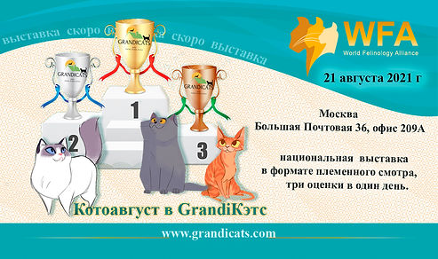 _grandicats выставка.jpg