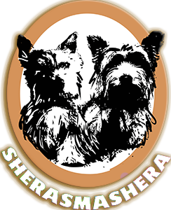 sherasmasheroy-retina