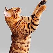 grandicatsflawlesscat.jpg