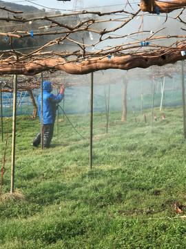 木の幹の皮むき