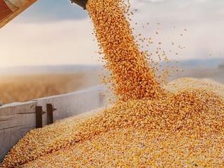 É melhor ir vendendo milho: ENTENDA