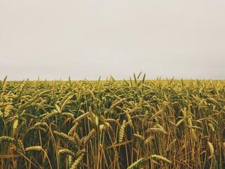 What's the Craze Surrounding Non-GMO Foods?