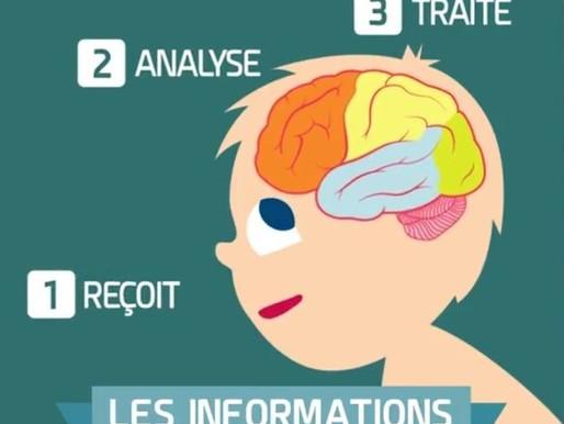 Comment fonctionne notre cerveau : Cécile Bricout      Novembre 2016
