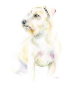 terrier mix dog w.jpeg