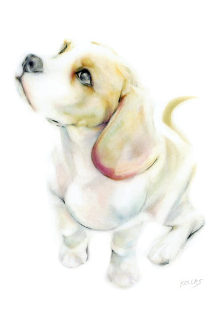 beagle web.jpg