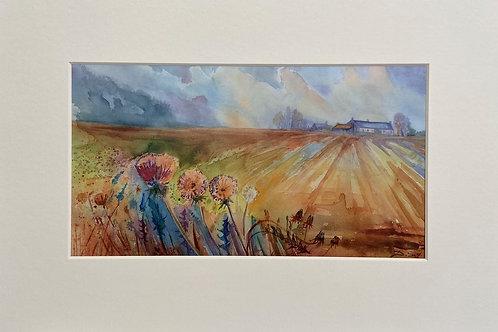 Scottish Fields