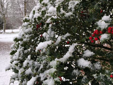 Monday 11th January - Conservatory & House Plants - CANCELLED