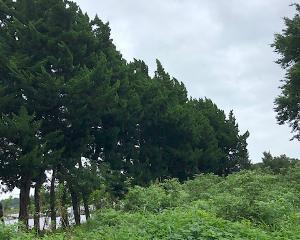 伐採作業風景!!