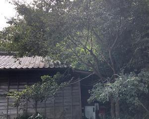 家にかかった枝おとし風景