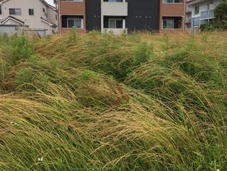 草刈り案件