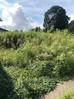 草刈りと入道雲