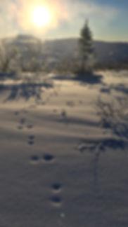 Senvuxen fjäll flexitrappans kontakt bild