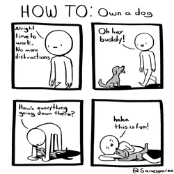 own a dog