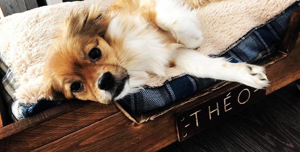 Lit pour petit chien