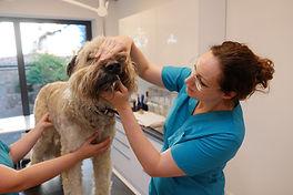 Allgemeine Untersuchung Zahnuntersuchung Hund Fachtierarztpraxis Dr. Lippert Magdeburg