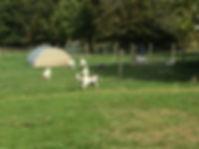 Hare Farm.jpeg
