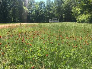 Spring Update - 5/20/20