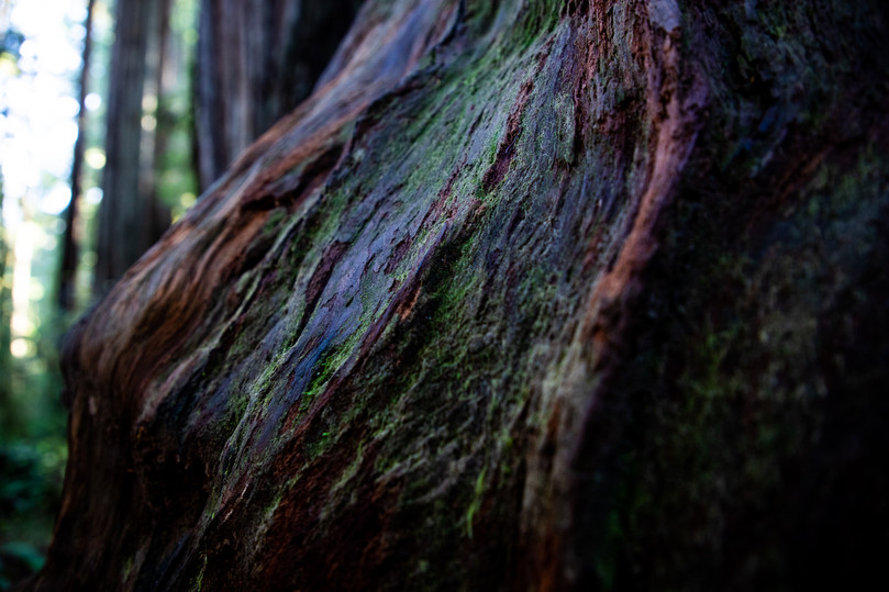 Old growth teachings