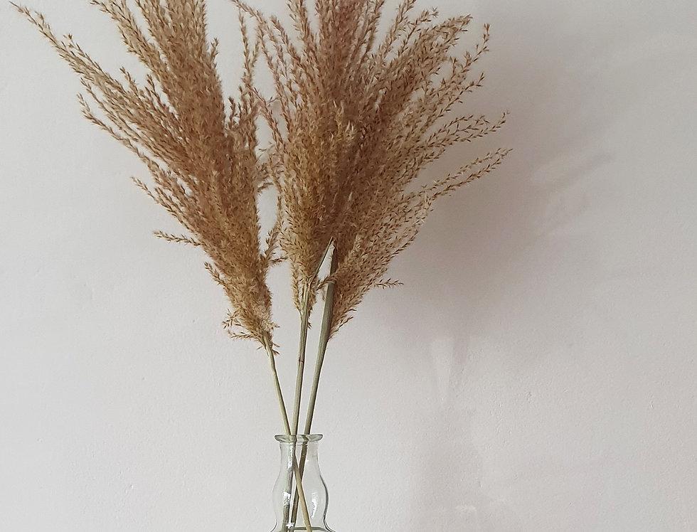 NATURAL FLUFFY REED GRASS