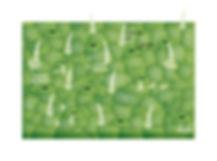 SpatialOrganizationMicrobesOnLeaves.jpg