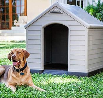 ¿Sabes como elegir la casa ideal para tu perro?