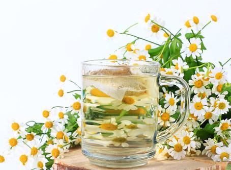 Cultiva Manzanilla fácilmente en casa