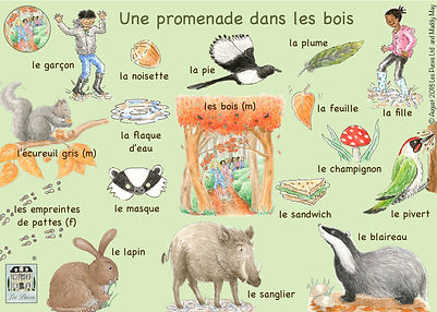 Woodland creatures in French, French vocabulary for woodland creatures, woodland animals vocabulary in French, woodland animals in French, Les Puces woodland animals vocabulary sheet.