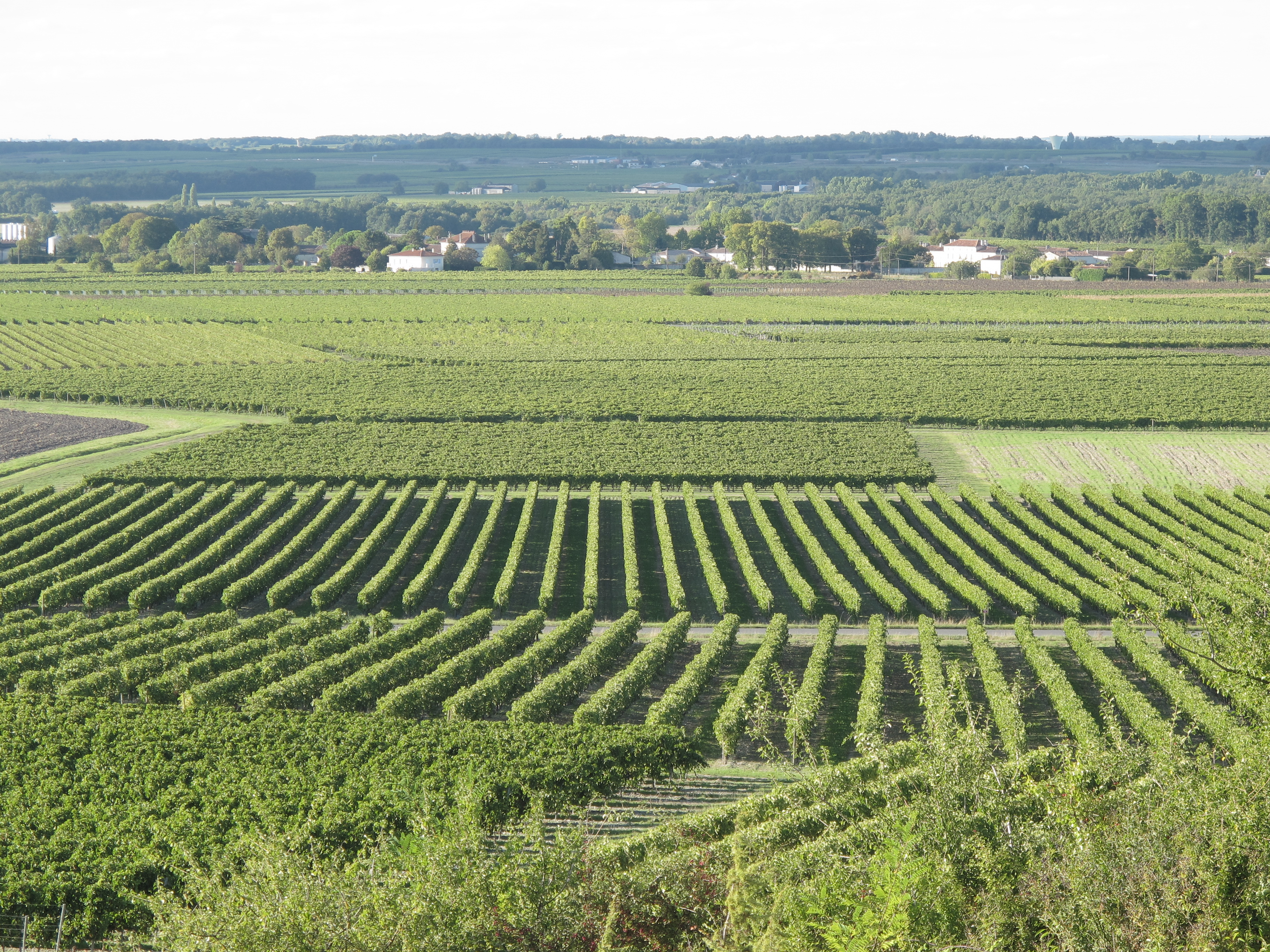 The Vineyards of the Grand Champagne
